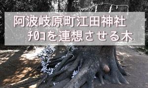 阿波岐原にあるご神木の画像